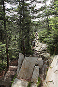 Appalachian Trail....Day hikers make their way south along the TWINWAY Trail  during the summer months. Located in the White Mountains, New Hampshire USA.