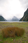 Grass and Mitre Peak, Milford Sound, Fiordland, New Zealand