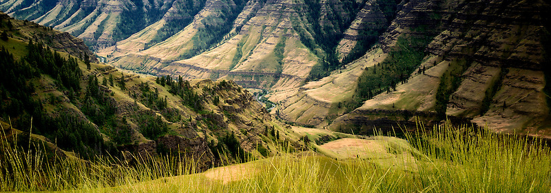 Grasses and Imnaha Canyon. Hells Canyon National Recreation Area, Oregon