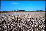 4-21-01.In the Florida Everglades off Highway 41 known as the Tamiami Trail. Saltwater intrusion is a serious concern during a drought.