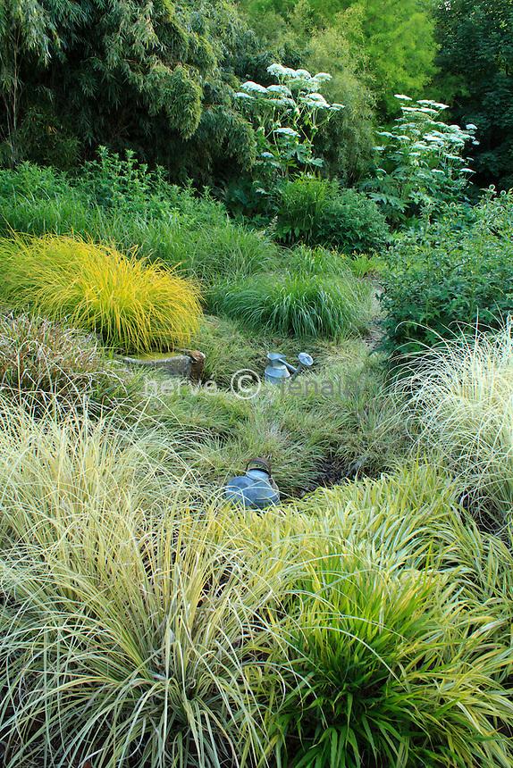 Jardins du pays d'Auge (mention obligatoire dans la légende ou le crédit photo):.massif de graminées et en fond berce du Caucase (Heracleum mantegazzianum).