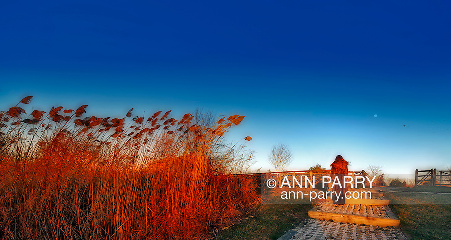 Panorama of Young woman in faux fur seen from behind walking away on stone path between marsh reeds, flock of birds dimly seen flying by moon (MR)