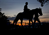 BALTIMORE, MD - MAY 18:  Always Dreaming heads back from the track after exercising in preparation for the Preakness Stakes this Saturday at Pimlico Race Course on May 18, 2017 in Baltimore, Maryland.(Photo by Scott Serio/Eclipse Sportswire/Getty Images)