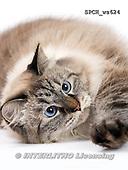 Xavier, ANIMALS, REALISTISCHE TIERE, ANIMALES REALISTICOS, FONDLESS, photos+++++,SPCHWS624,#A#