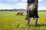 USA, Alaska, Homer, bear guide Michael keeps an eye on a curious female grizzly bear, Katmai National Park, Katmai Peninsula, Hallow Bay, Gulf of Alaska