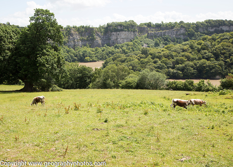 Incised meander and river cliff of the River Wye, Lancaut,Gloucestershire, England, UK