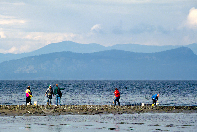 Rathtrevor Beach Provincial Park near Parksville, Vancouver Island, BC, British Columbia, Canada - Clam digging on Beach along Georgia Strait, Pacific Ocean