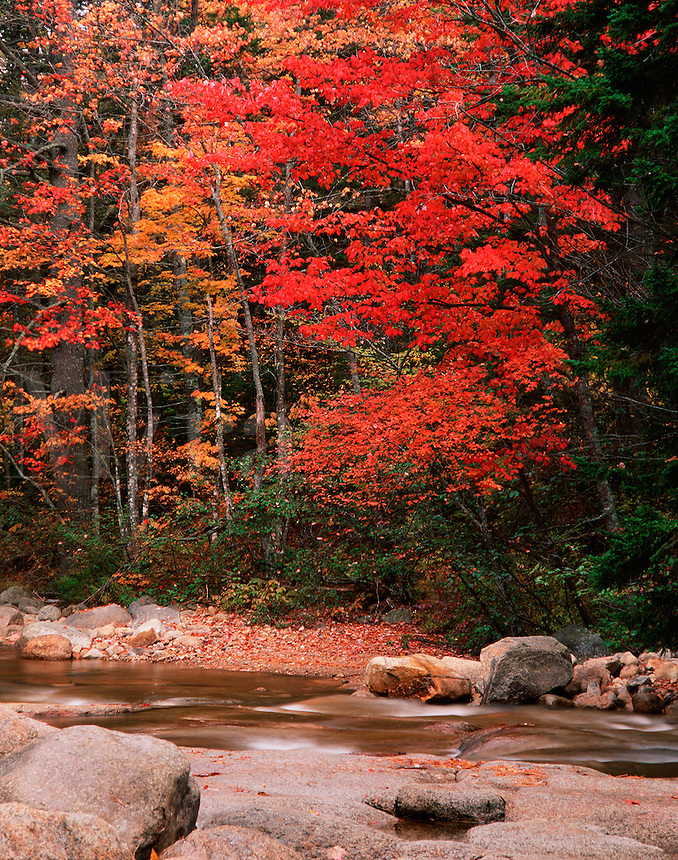 Scenic autumn landscape of fall foliage on the banks of a swift river. As seen from the Kancamagus Highway in the White Mountain National Forest. New Hampshire.