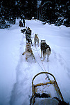 WY:  Dog sledding in Jackson Hole near Grand Teton National Park, Wyoming  .Photo Copyright: Lee Foster, lee@fostertravel.com, www.fostertravel.com, (510) 549-2202.Image: wygran209