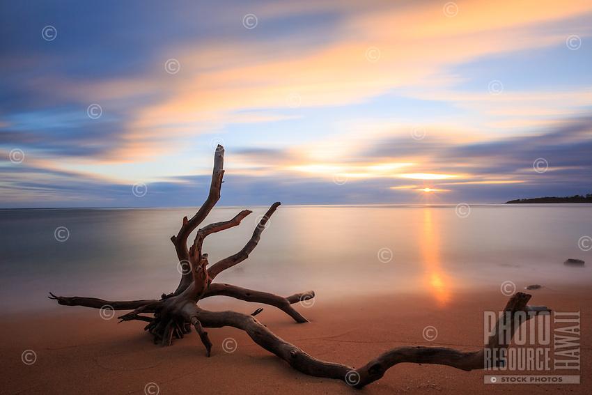 A driftwood tree partially poking out of the sand provides contrast to a gentle reflection of the morning light on Anahola Bay, South Aliomanu Beach, Kaua'i.