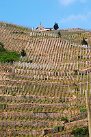The Hermitage chapel.   The Hermitage vineyards on the hill behind the city Tain-l'Hermitage, on the steep sloping hill, stone terraced. Sometimes spelled Ermitage.  Domaine M Chapoutier, Tain l'Hermitage, Drome Drôme, France Europe