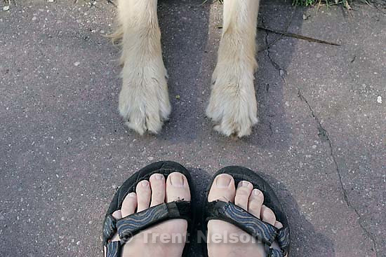 Trent feet and Sophie dog paws<br />