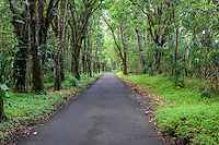 Small scenic road leading through green foliage in Puna, Big Island.