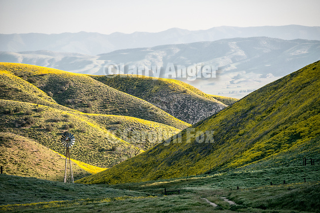 Aerator windmill along San Diego Creek in the Temblor Range, covered with golden wildflowers during spring, San Luis Obispo County, Calif.