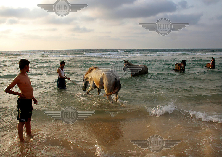 Two Palestinian men wash their horses in the mediterranian sea.