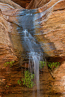 Waterfall and Venus maidenhair ferns<br />