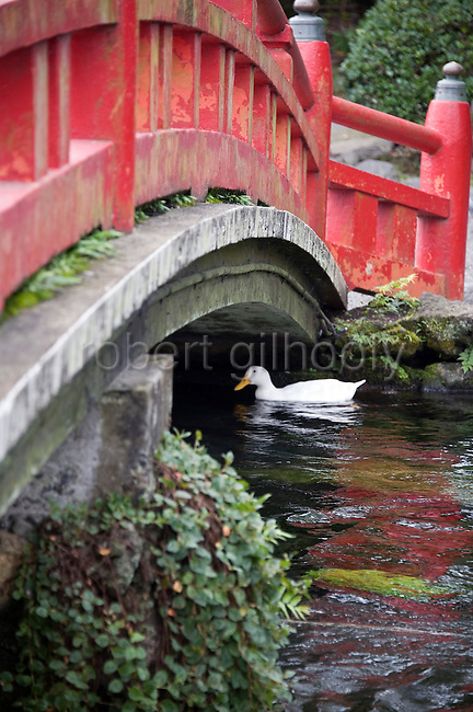 Photo shows the sacred pond at Fujisan Hongu Sengen Taisha in Fujinomiya City, Shizuoka Prefecture Japan on 01 Oct. 2012.  Photographer: Robert Gilhooly
