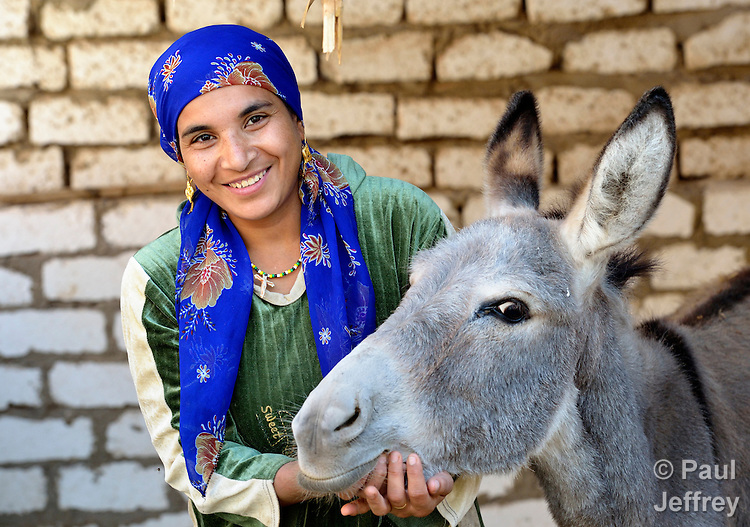 Nora Sobhy, seen here with her donkey, lives in the Egyptian village of Kafr Darwish, where the ACT Alliance and Bless, the social development agency of the Coptic Orthodox Church, carried out a relief project that benefited individuals and families adversely affected by the Libyan revolution and other events in the Arab Spring, which caused many Egyptians working abroad to lose their employment and return to their home villages. The project involved cleaning the village, reconstructing homes and improving the local quality of life. Sobhy's husband worked in Libya until the revolution there..