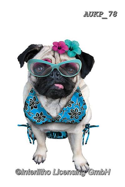 Samantha, ANIMALS, REALISTISCHE TIERE, ANIMALES REALISTICOS, funny photos, photos+++++,AUKP78,#a#, EVERYDAY ,party