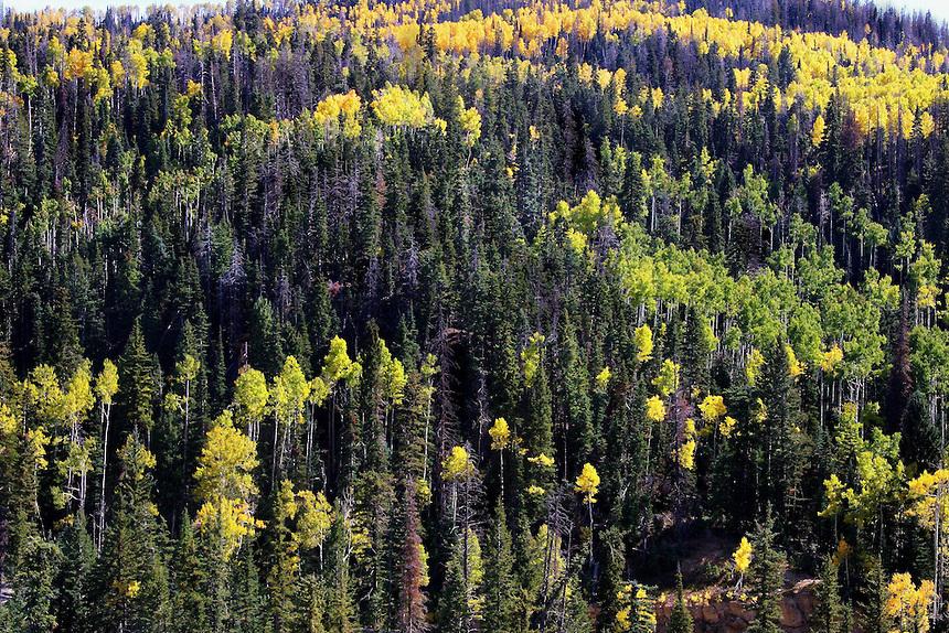 Southern Utah