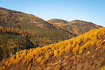 The Selkirk mountains are covered with the golden fall colors of the tamarack trees