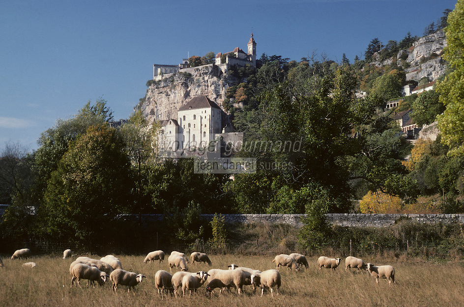 Europe/France/Midi-Pyrénées/46/Lot/Causse de Rocamadour/Rocamadour : Moutons