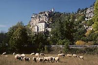 Europe/France/Midi-Pyrénées/46/Lot/Causse de Rocamadour/Rocamadour: Moutons