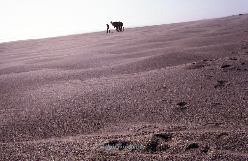Benedict Allen on his journey through the Namib Naukluft  desert as he travelled  from South Africa to Angola, 1,700 miles. Skeleton Coast, Namibia..