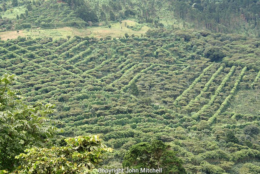 Coffee plantation or finca in the mountains of western El Salvador