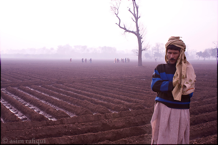 Okara, Punjab, Pakistan. 2008. Landless peasants in the fields at dawn - most farmers in this area are on tenant farming agreements with the Pakistan Army military farms