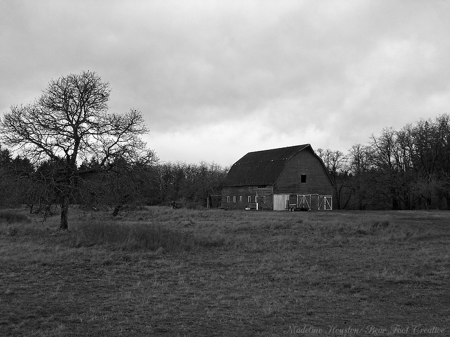 The Miller-Brewer barn sits among oak trees at the Scatter Creek Wildlife Area in Rochester, Washington, USA.