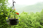 Camp Up-There, Elizabethtown, NY. hanging basket with nasturtium