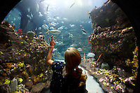 A woman views fish in the main tank of the North Carolina Aquarium at Fort Fisher.