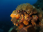 Du Li Jiao (Independence Reef), Green Island -- Colorful soft coral in the underwater landscape.