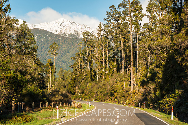 Scenic road through rainforest of kahikatea trees with mountain views near Fox Glacier, Westland Tai Poutini National Park, West Coast, UNESCO World Heritage Area, New Zealand, NZ