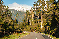 Scenic road through rainforest of kahikatea trees with mountain views near Fox Glacier, Westland Tai Poutini National Park, West Coast, UNESCO World Heritage Area, New Zealand, NZ