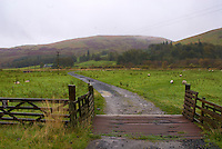 Scotland near Innerleithen, sheep meadow fields and bridge, farm animals, hills, autumn