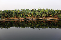 Trees line the banks of a polluted river on the outskirts of Kolkata.<br />