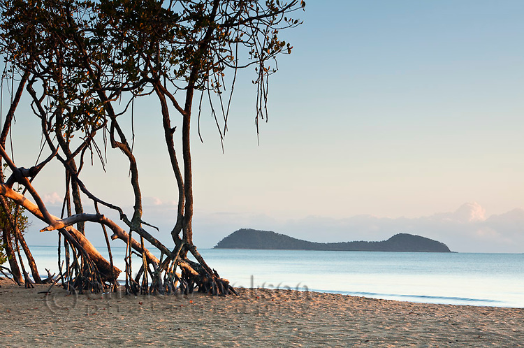 Mangrove trees on beach with Double Island in background.  Kewarra Beach, Cairns, Queensland, Australia