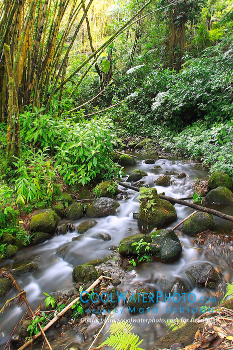 Kolekole Streams, Hilo, Big Island, Hawaii