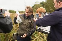 Harvest mouse (Micromys minutus) survey. Surrey, UK.