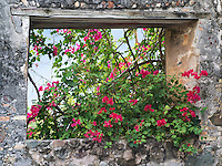 Stone window with bouganvilla flowers. St. John, Virgin Islands.