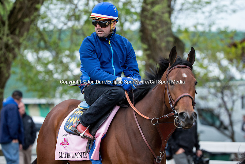 APRIL 26, 2015: Maybellene, trained by Bob Baffert  walks to the track to exercises in preparation for the 141st Kentucky Oaks at Churchill Downs in Louisville, KY. Jon Durr/ESW/Cal Sport Media