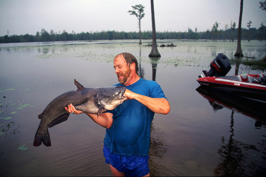 Man noodling or grabbling blue catfish in North Carolina lake