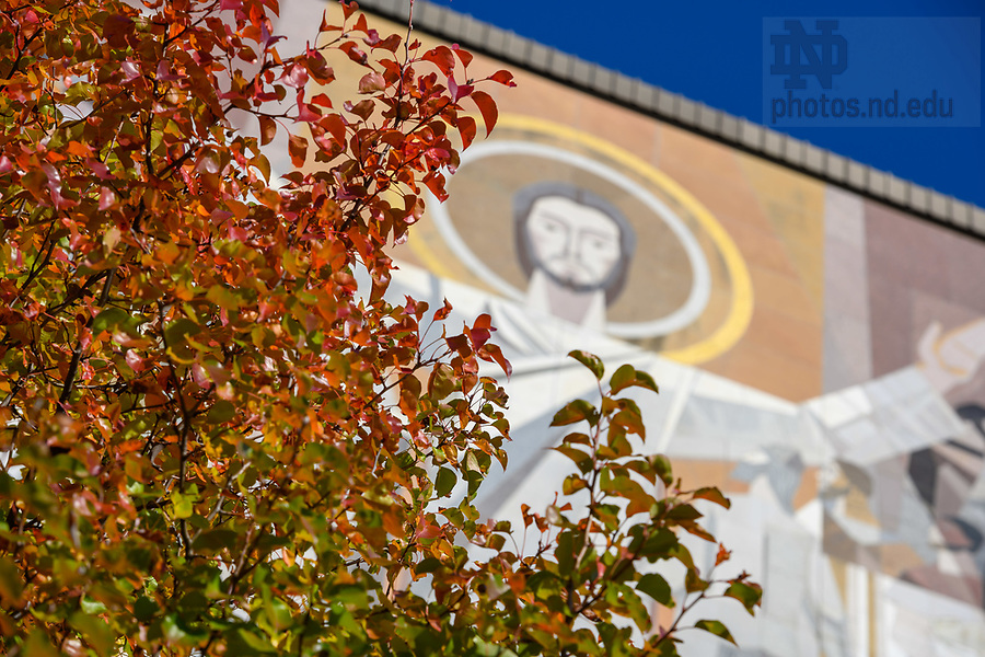 November 5, 2019; Fall color frames the Word of Life mural, commonly known as Touchdown Jesus. (Photo by Matt Cashore/University of Notre Dame)