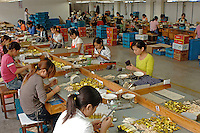 Workers at one of the worlds most successful brush manufacturers in the world. The Yixing Zhenxin Made Brush Co. Ltd produces a staggering 220,000 brushes every day using relatively non-high-tech and labour intensive methods for a variety of domestic and international clients. International clients include the home Depot, Wallmart and ICI to name a few..