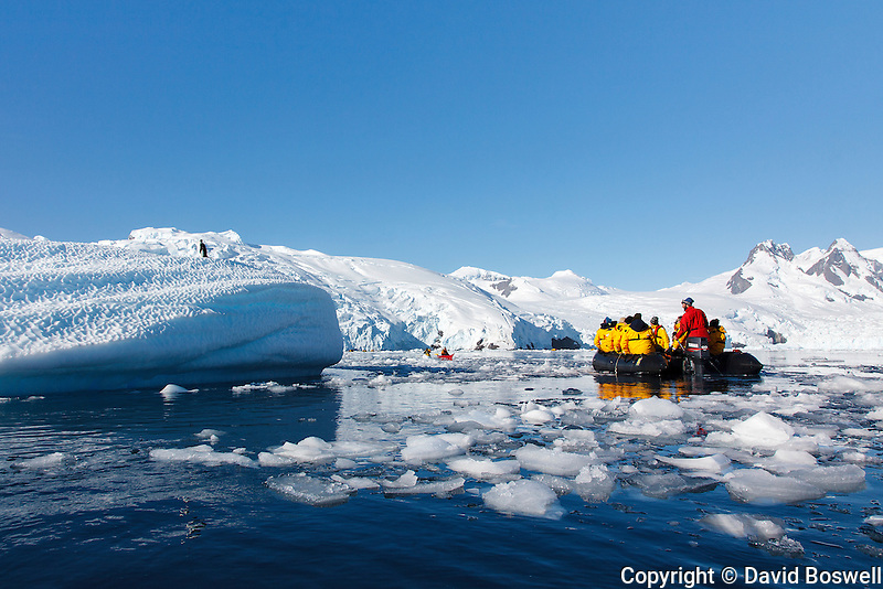 A group aboard a zodiac check out an Adelie penguin on a small iceberg in Cierva Cove along the Antarctic Peninsula.
