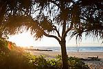 View through pandanus palms at Four Mile Beach.  Port Douglas, Queensland, Australia