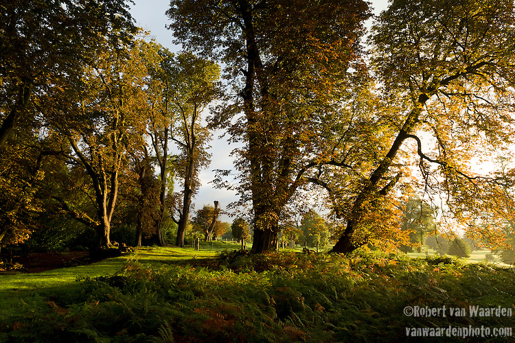 Early morning light on the trees of the Shuttleworth estate at Old Warden, Bedfordshire, the United Kingdom.
