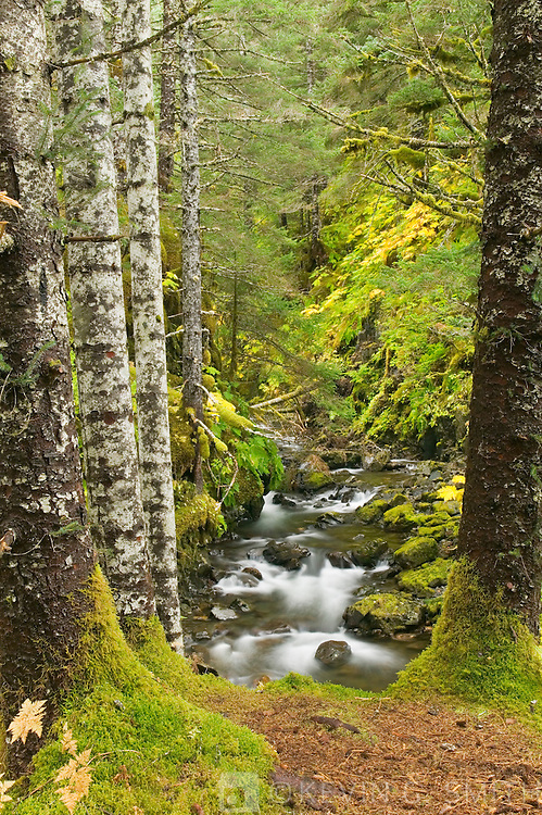 Rain forest and stream, Anton Lasen Bay, Kodiak Island, Alaska,